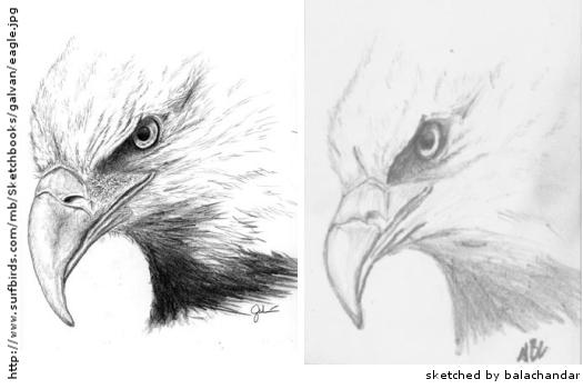 eagle-250x359